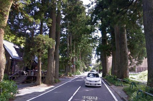 431杉並木.JPG